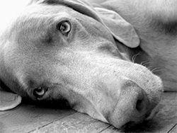 euthanasia-services