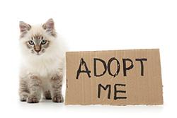 adoption-services